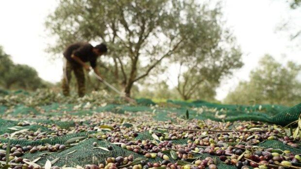 «Νέοι Γεωργοί: Καταδίκη στη γήρανση και τον μαρασμό για κλάδους και ολόκληρες αγροτικές περιοχές»