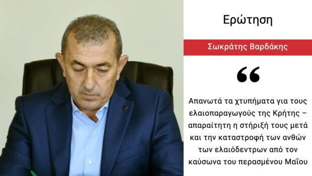 Σωκράτης Βαρδάκης: «Απανωτά τα χτυπήματα για τους ελαιοπαραγωγούς της Κρήτης – απαραίτητη η στήριξή τους μετά και την καταστροφή των ανθών των ελαιόδεντρων από τον καύσωνα του περασμένου Μαΐου»